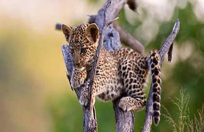 حديقة الحيوانات في يالا سريلانكا